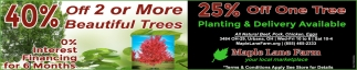 40% off 2 or More Beautiful Trees