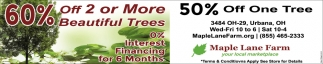 60% off 2 or More Beautiful Trees